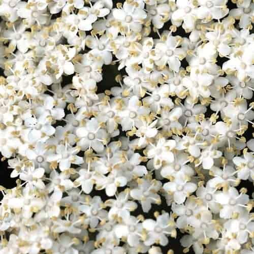 ontwerp bloemen 3 detail