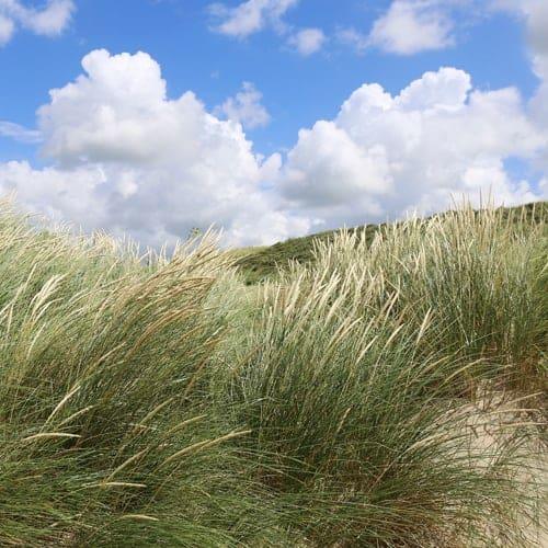 ontwerp strand duinen 1